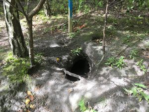 badger sett hole entrance
