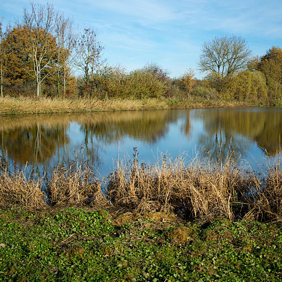 Eclogy of a Pond Essay