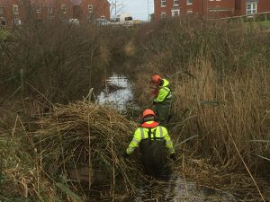 reedbed clearance and cutting in autumn