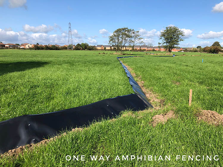 one way amphibian fencing