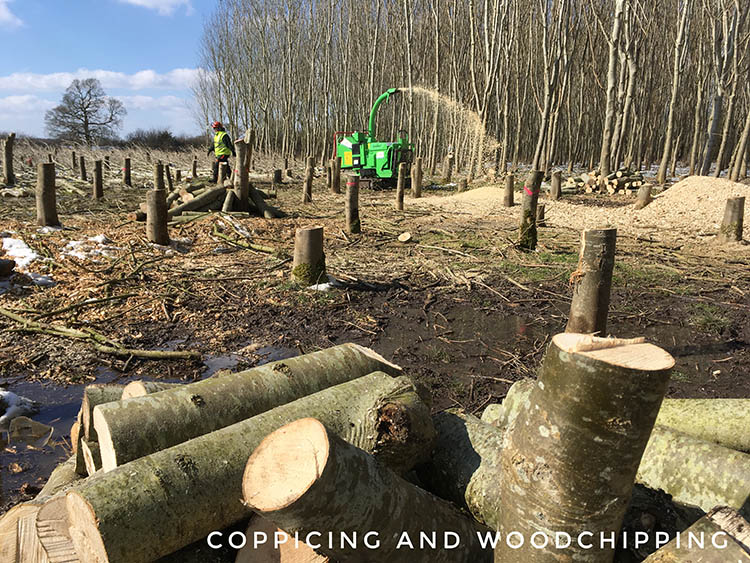 Coppicing and woodchipping