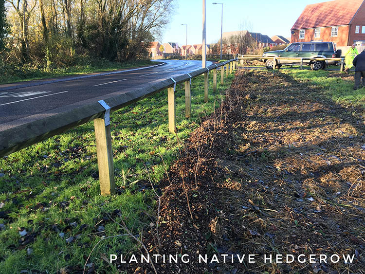Native hedgerow planting