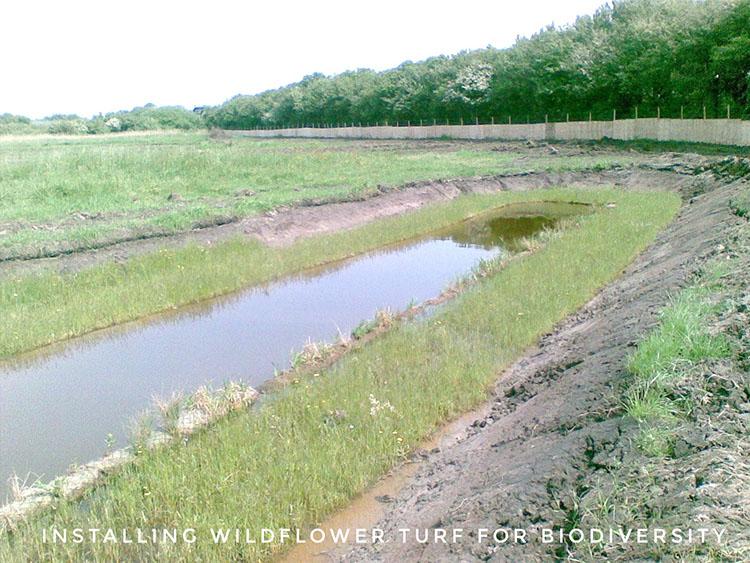 Wildflower turf installation